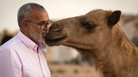 """Sahara Marocain. Fidèle aux enseignements de ses ancêtres, un éleveur de dromadaires """"à l'ancienne"""" (Portrait)"""